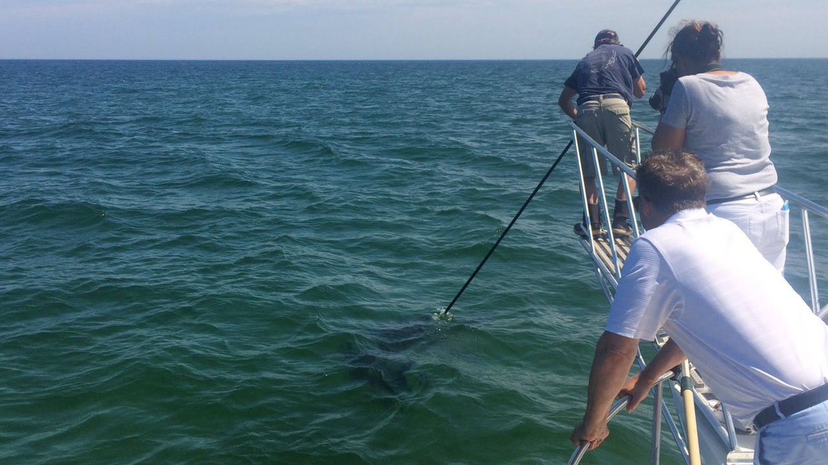 How a local shark conservancy is turning fear to fascination