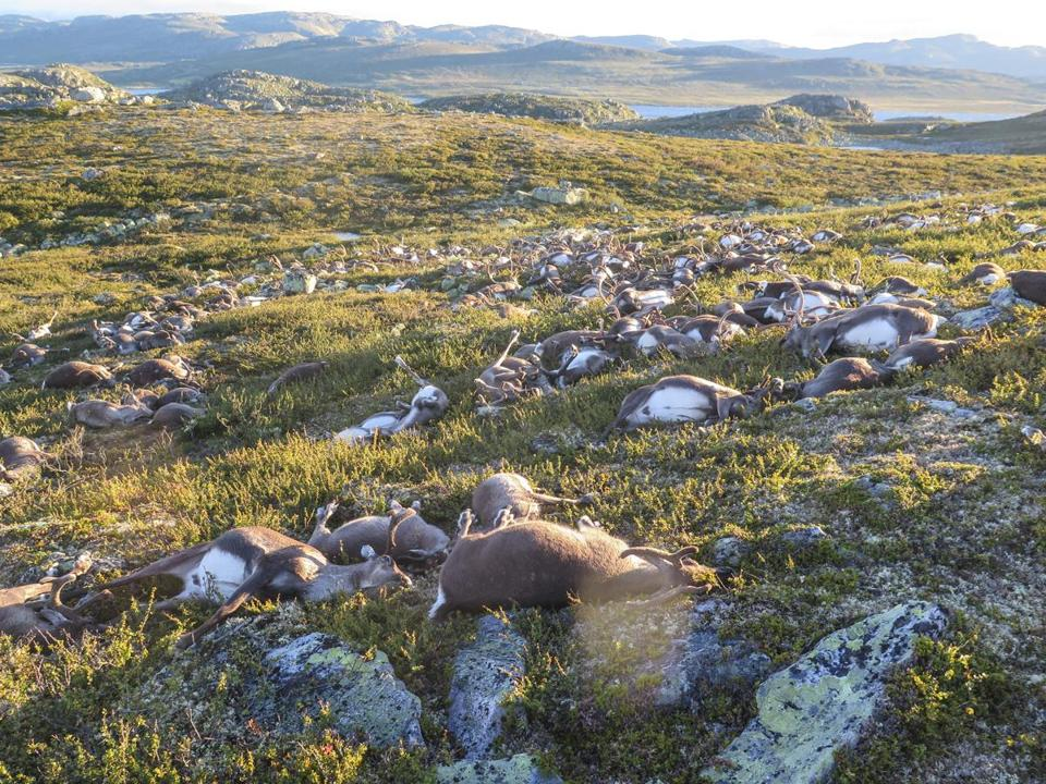 Eerie photos show more than 300 reindeer killed by lightning in Norway