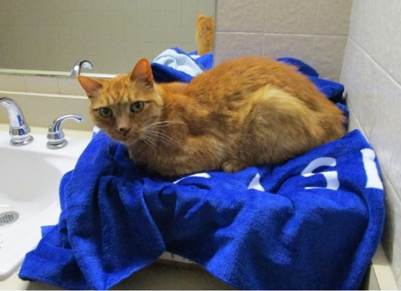 Family's lost cat found after cross-country move from Seattle to Virginia -