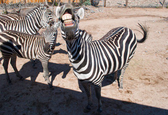 Out of africa zoo coupons