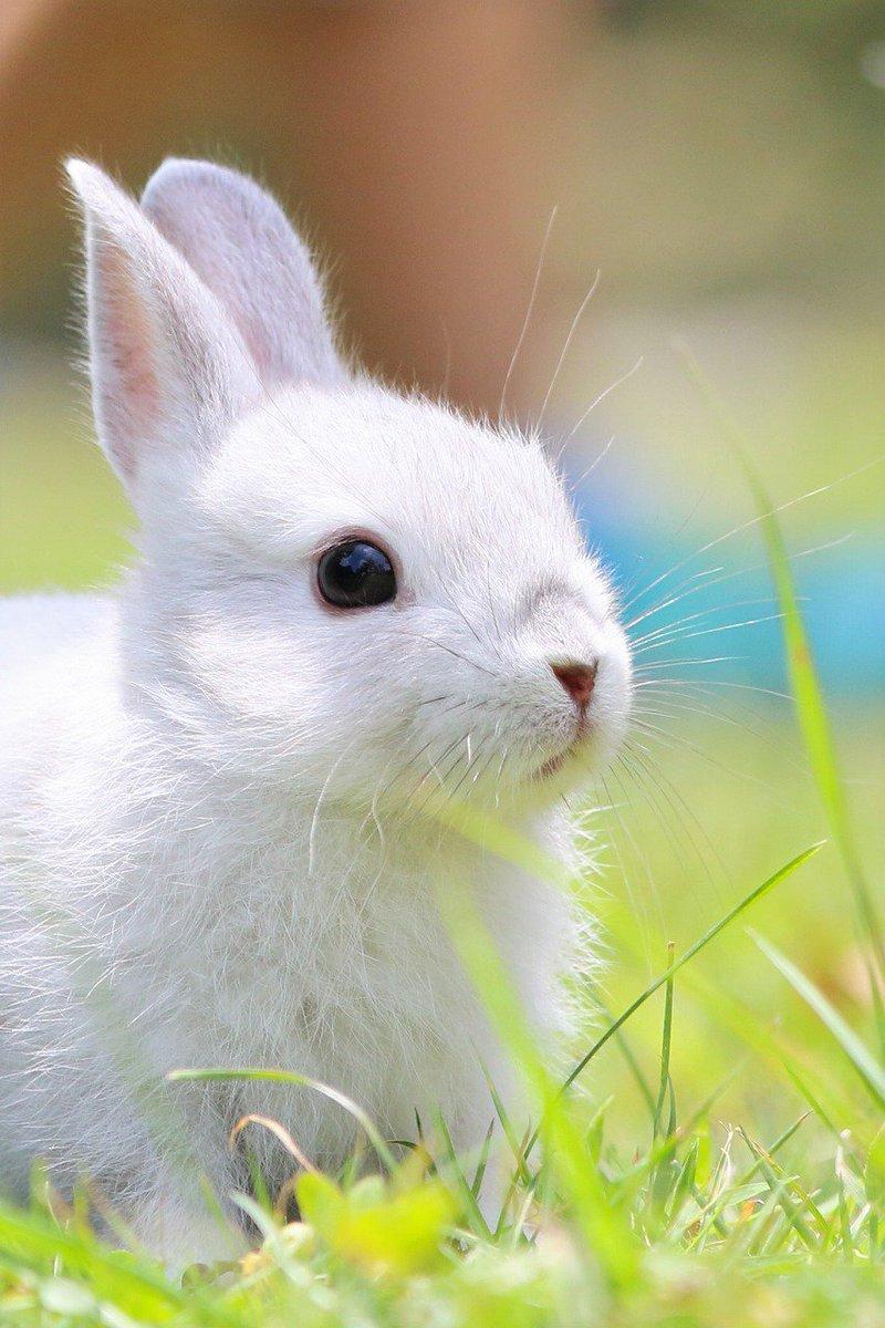 今日、ウサギの足りない方に(^^♪って足りてないのは自分でした…ウサギを見てると落ち着きます! pic.twitter.com/2tBDvsXrDS