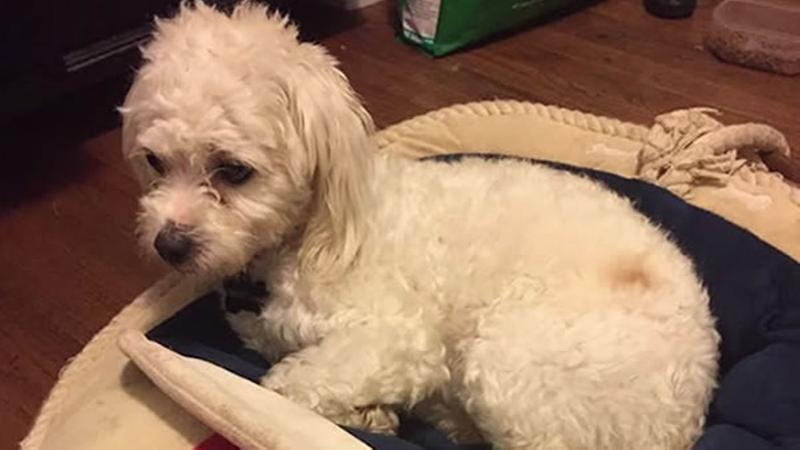 Couple facing charges in horrific scalding death of dog
