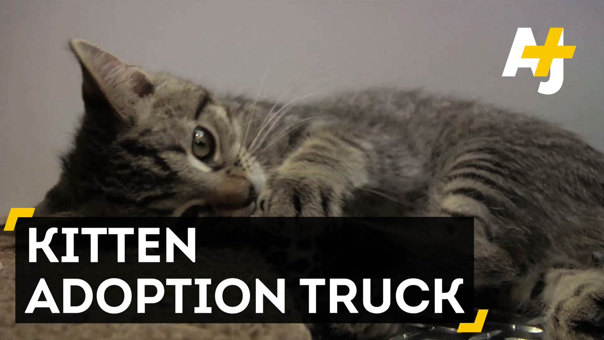 If you vote @BitchestheCat for president there will be a kitten truck on every corner. https://t.co/adVseX6pF5