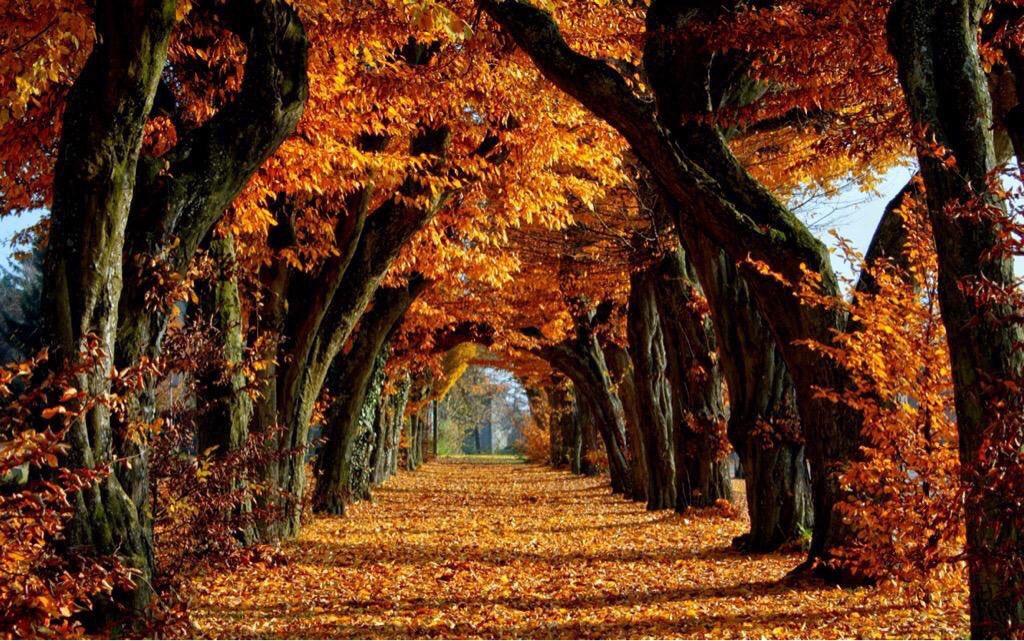 Картинки по запросу fondos de pantalla otoño