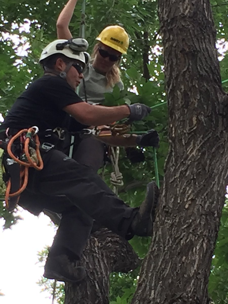 Davey Tree Expert Co On Twitter Davey S Jeremy Lewis Worked On Tree Climbing Skills With Our Fort Collins Co Intern Haily Vanderbur From Nau