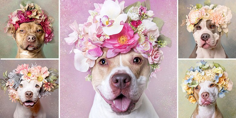 American Pitbulls Are Anything But Scary In These Adorable Portraits Of Them With Flower C… https://t.co/qdcoAIX8YW https://t.co/497GOOVF94
