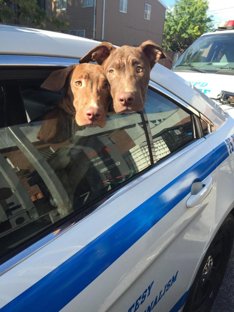 NYPD cops save two emaciated puppies living in a filthy Brooklyn basement