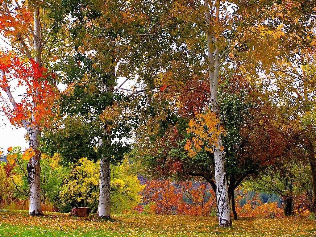 Фото, картинки осень в сентябре с анимацией