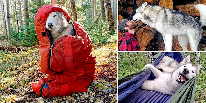 Loki The Adorable Wolf-Dog Loves Going On Epic Outdoor Adventures With His Owner https://t.co/X3Upckjpmb https://t.co/8wQIGKlIcj