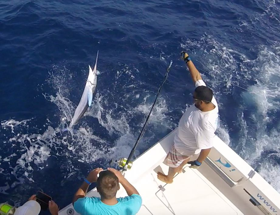 Grand Canary - Fish On released a White Marlin.