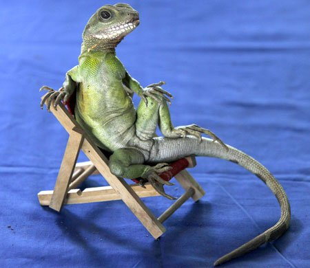 Oah oh, we're halfway there, Oah oh, lizard on a chair https://t.co/vRAyDAd4ld