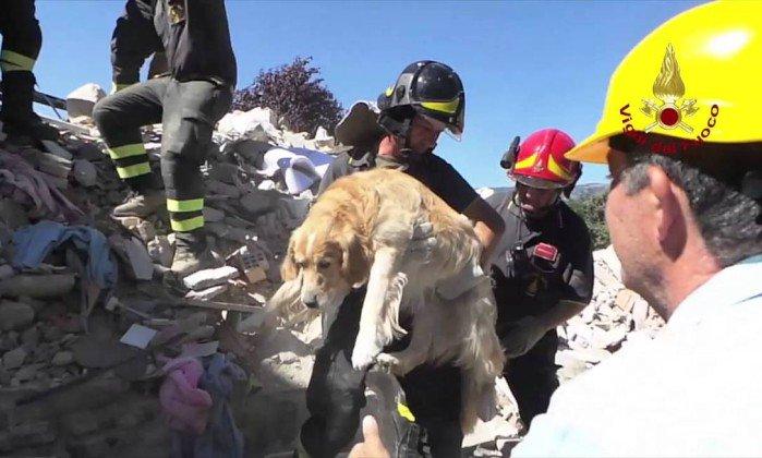Vídeo: Romeo, o cachorro que sobreviveu nove dias sob os escombros após terremoto na Itália https://t.co/aGVAQbdab7 https://t.co/Ke3xenr7LO