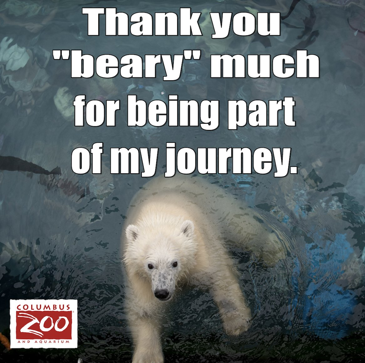 Columbus Zoo On Twitter Celebrate Your Love For Nora And Make A
