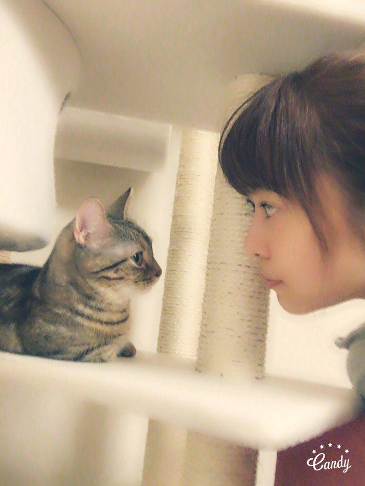 愛猫のマンチカン太郎と指原莉乃のツーショット