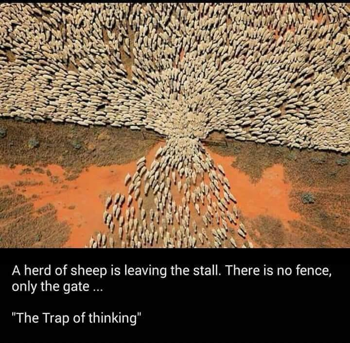 Interesting - A herd of sheep is leaving the stall.There is no fence, only the gate... #thetrapofthinking https://t.co/1miWp8EH2L