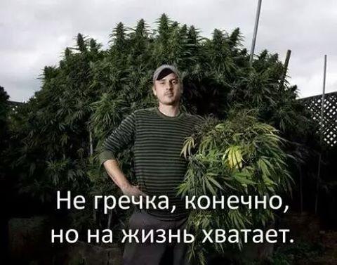 Полицейские на Луганщине уничтожили 89 тыс. кустов конопли - Цензор.НЕТ 2684