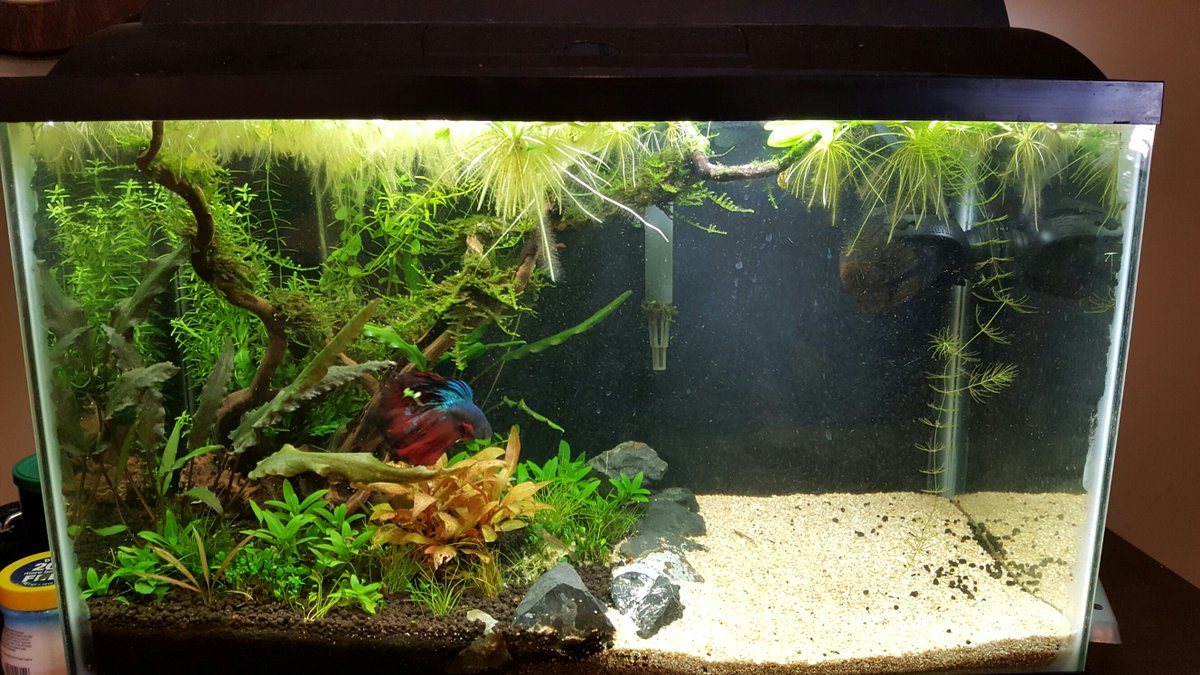 Wow 10 Cool Fish Tank Decoration Ideas Amp How To Copy Them