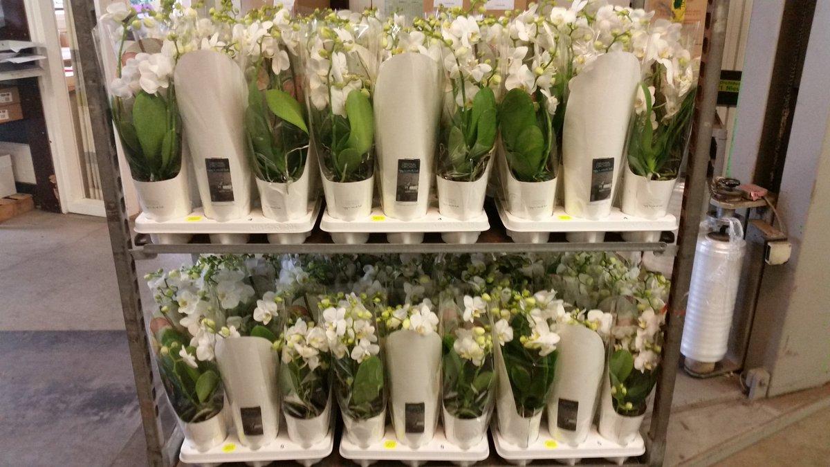 orchidee t nieuw bos