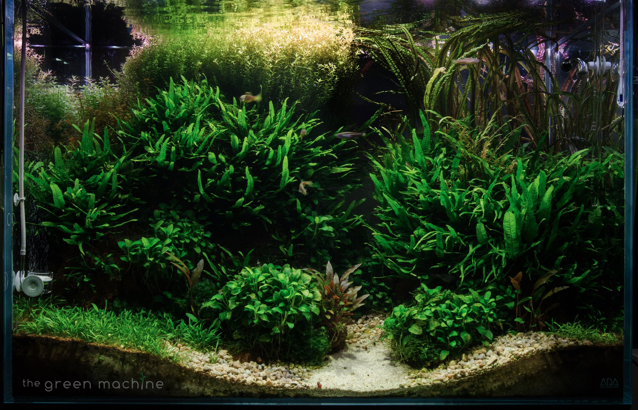 """The Green Machine on Twitter: """"Altitude #Aquascape by ..."""