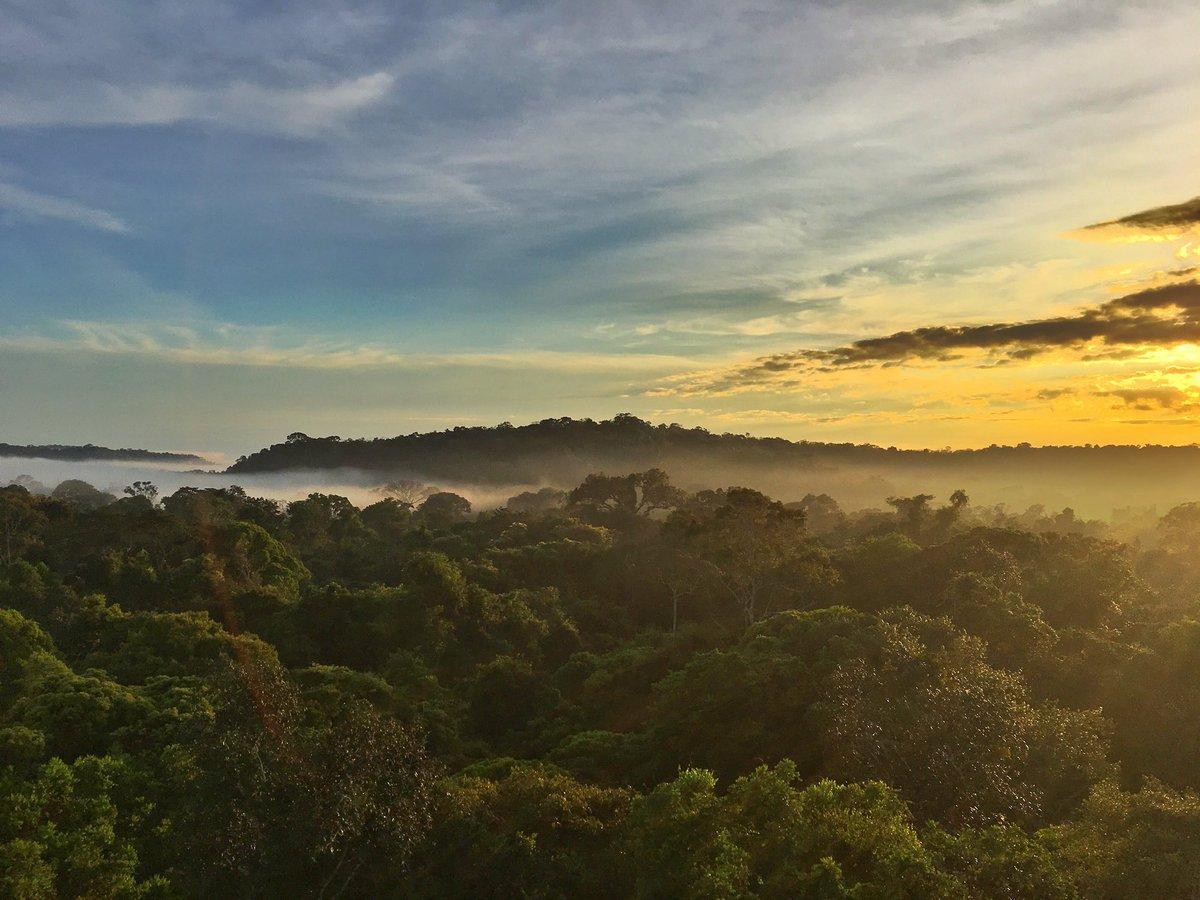 Hoje é o dia de um dos patrimônios naturais mais valiosos para a humanidade. #DiadaAmazônia #Desmatamentozero 🙏🏼🌳🍃☀️