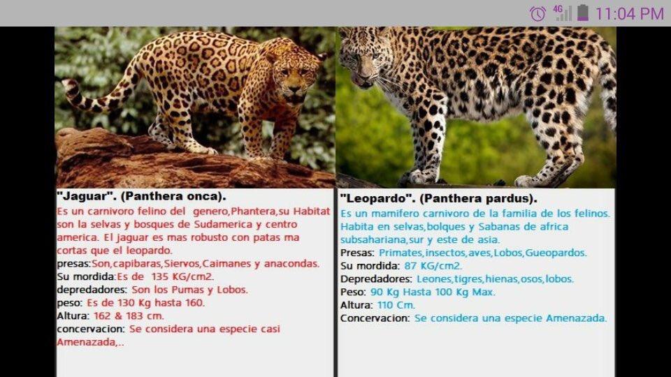 y tu sabes la diferencia entre un leopardo y un jaguar? aquí toda la