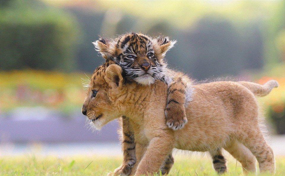 продолжает милые картинки обнимашек животных развивается абсцесс после
