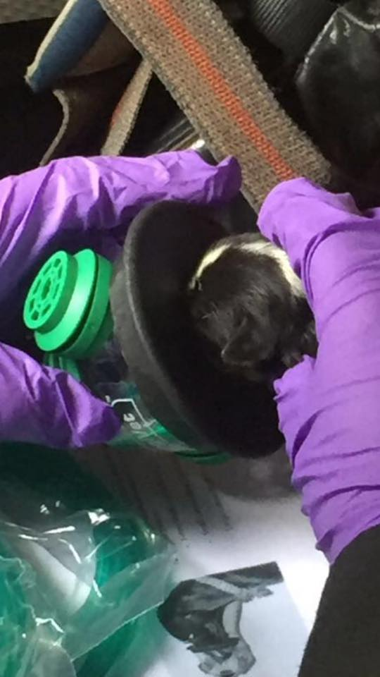 Two-day-old puppies rescued from barn fire and treated with pet oxygen masks @helpsmokeypaws https://t.co/RNcSjv3Bzw https://t.co/4OzWbL4Xpb