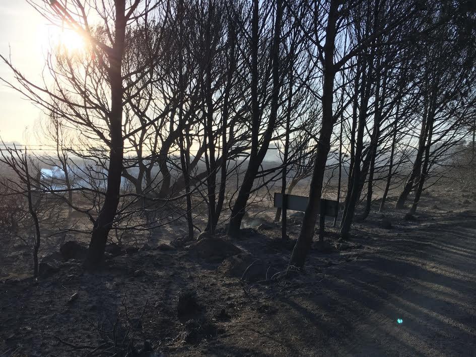 (Vídeo) Así han quedado algunas zonas de #EsMercadal tras el incendio: https://t.co/b7ZVBIZsJF #IFArenaldenCastell https://t.co/cIrvijSbRK