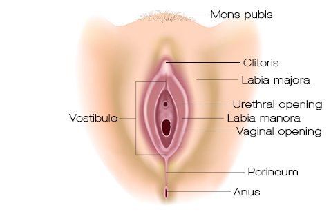 Related image Vagina