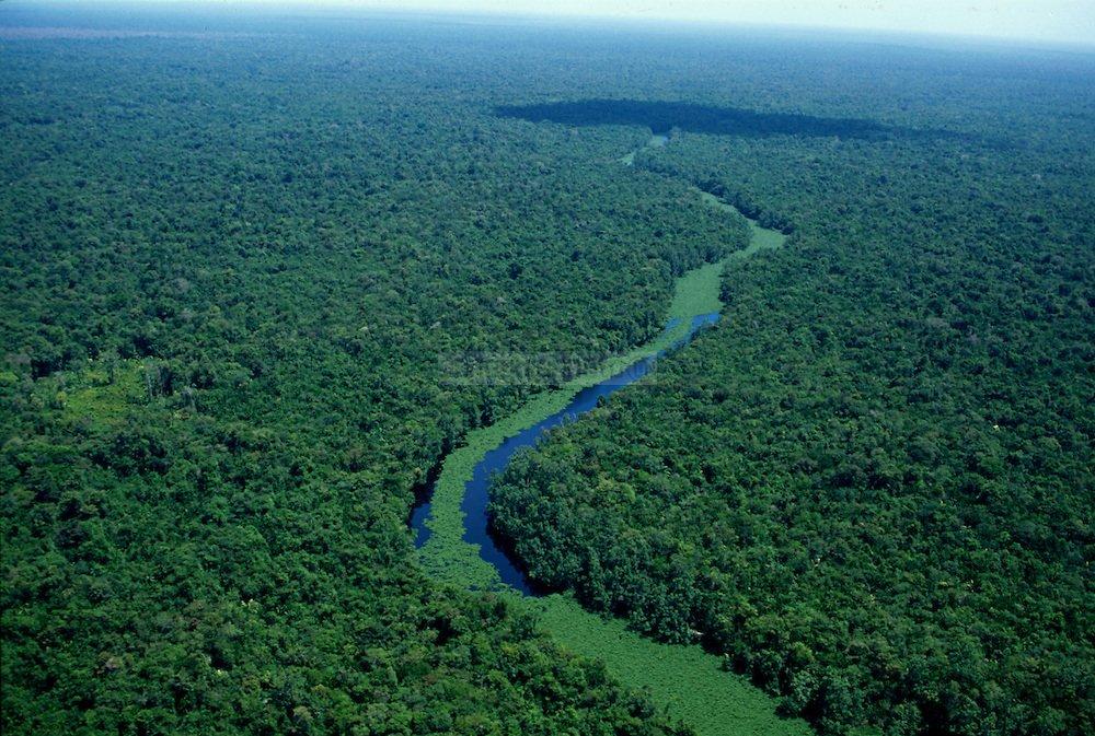 Orinoco River mari on Twitter...