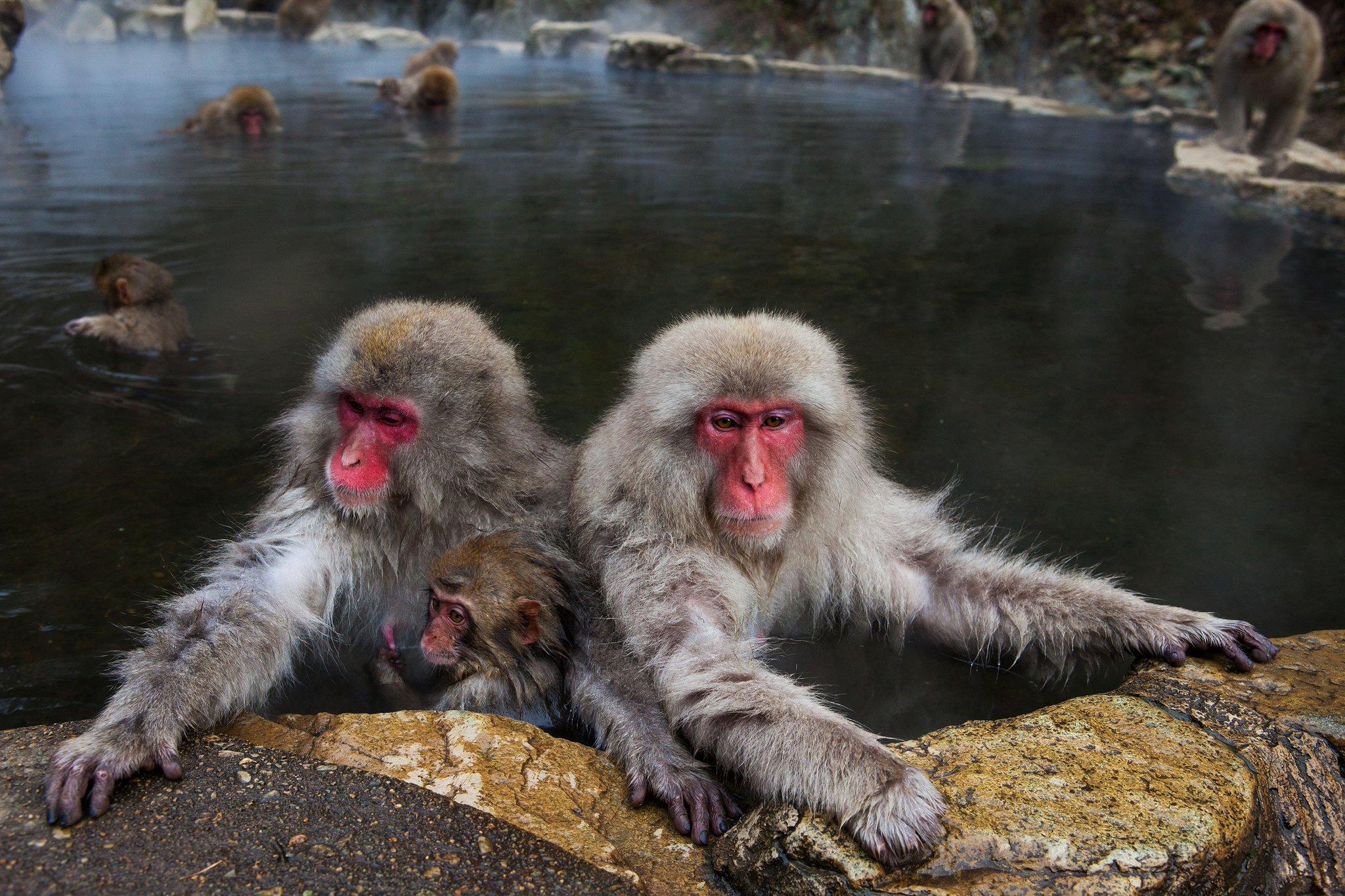 обезьяны и вода картинки пожалуй, небольшой