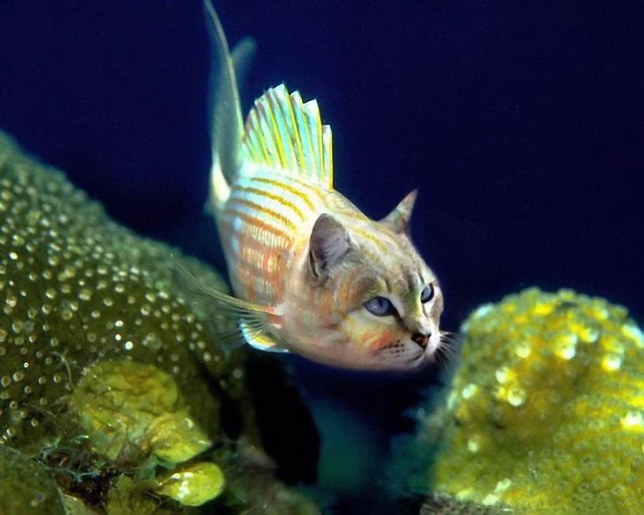 Смешные картинки рыбка