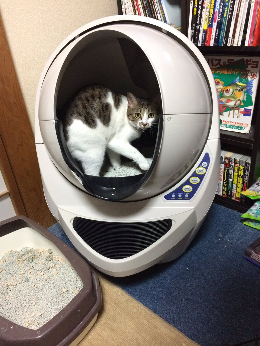 [ネコ]猫用の全自動トイレを高かったけど、奮発して購入したらさっそく使ってくれた(*´ω`*) [2016年9月8日]