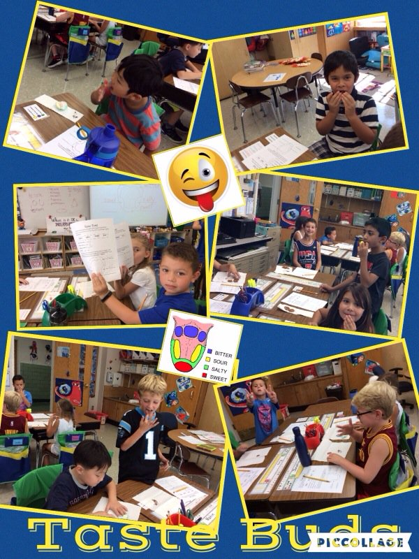 Digestion experiment #1...taste buds! Exploring our taste bud maps!! @Ivysherman #seamanstrength https://t.co/0izr1apfq8