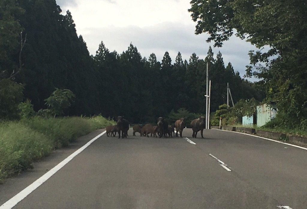 封鎖される田舎道 https://t.co/4z8VigYhfF
