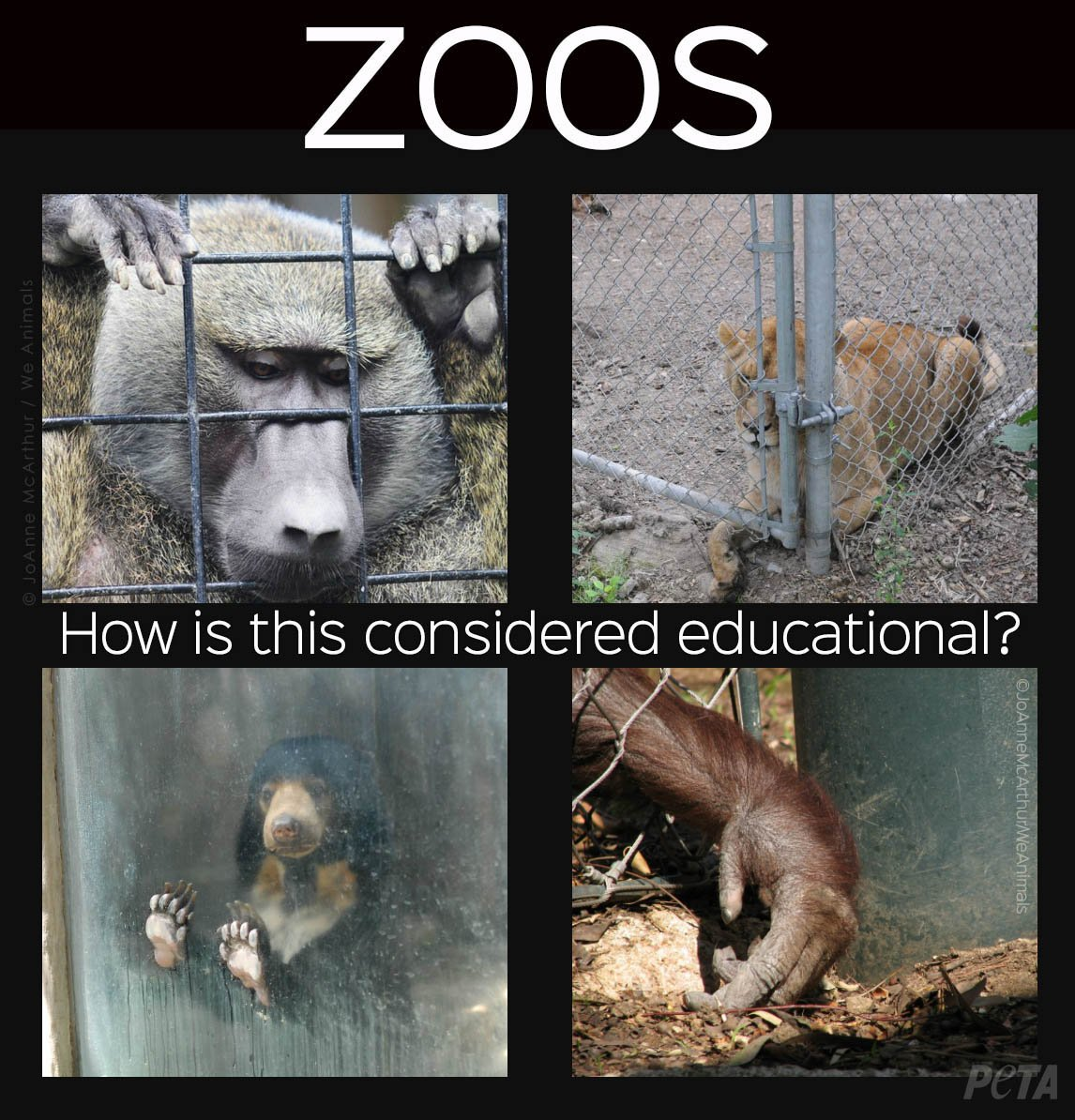 are zoos unethical to animals essay In his 2012 book an introduction to animals in visual culture, author randy malamud clearly states his beliefs about the ethical concerns zoos raise: the zoo experience is voyeuristic, imperialistic, inauthentic, and steeped in the ethos of consumer culture, which is antithetical to nature and ecology, and hence a danger to animals.