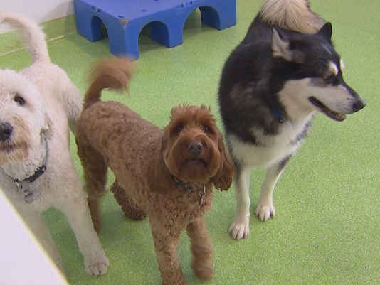 dog week exploring doggie daycare in seattle scoopnestcom With weekly dog boarding