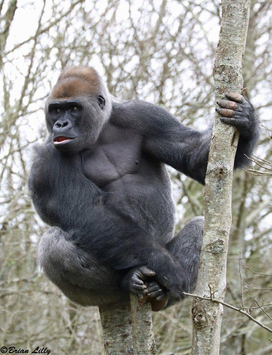 N'dowe Gorilla Gorilla Wines (@gorill...