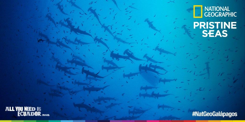 El documental #NatGeoGalápagos será visto por alrededor de 500 millones de personas en el mundo #Enlace492