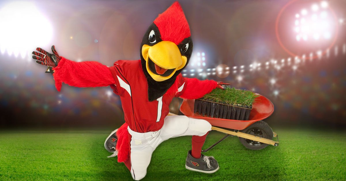 Rooting for @AZCardinals? We'll plant 100 trees every time they score a touchdown! #football https://t.co/QITb9iftNl https://t.co/BCx6fOf4xG