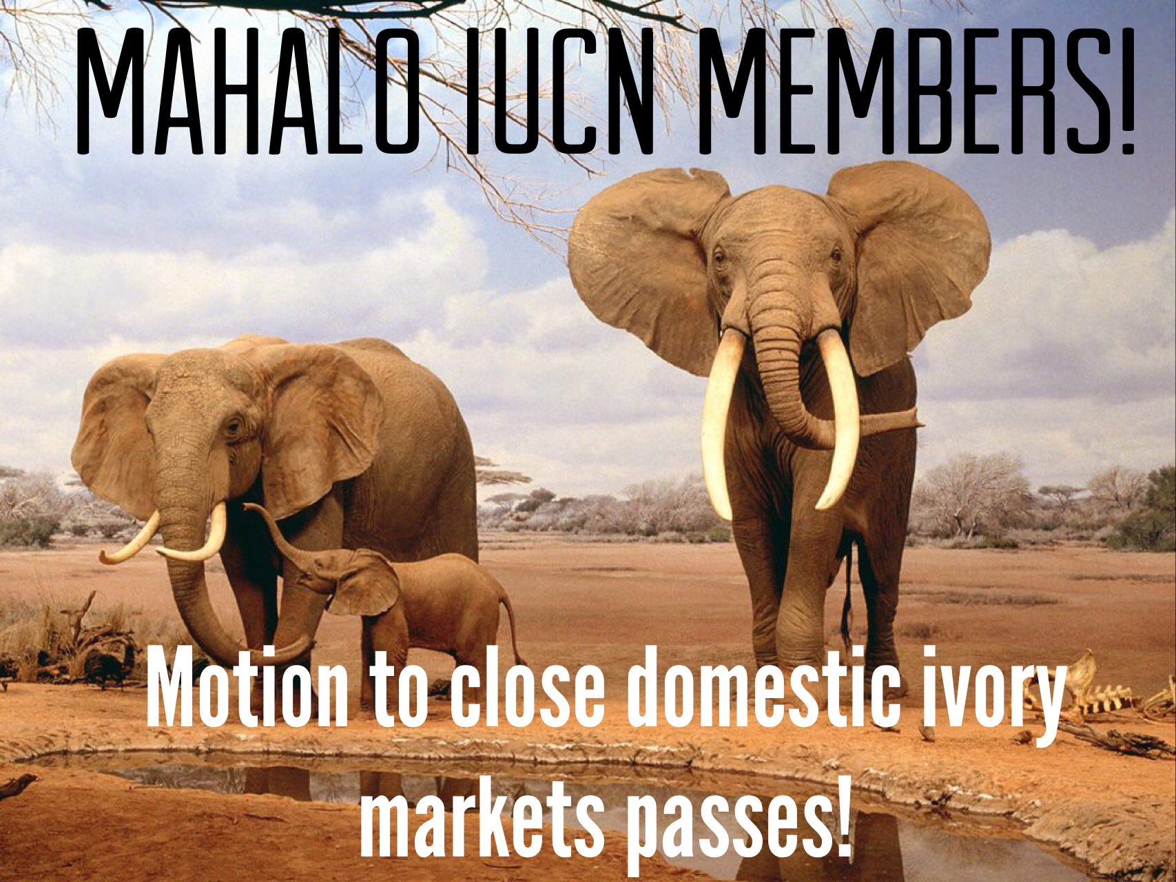 Mahalo @IUCN Members for passing Motion 007 & taking action to protect elephants from extinction! #IUCNCongress https://t.co/fEYzNtEOW9