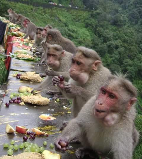 Onam feast treat r also gvn 2 monkeys in kerala.This discipline v also c in queues lining liquor shops #wayanad https://t.co/nR045pXWhy
