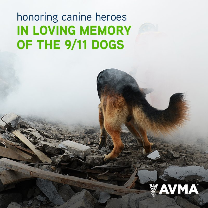 This year, September 11 is also #NationalPetMemorialDay. Today we honor the fearless SAR canines and their handlers. https://t.co/IHCJ6M8RKE