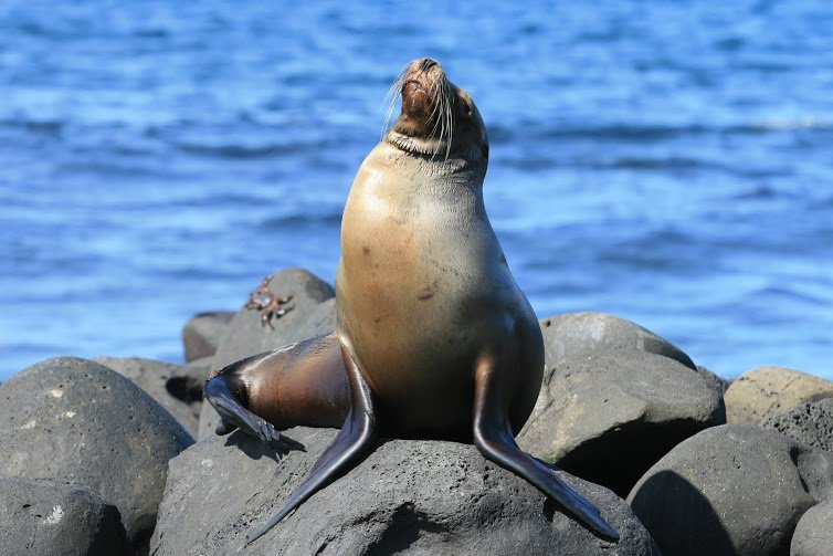 El documental #NatGeoGalápagos será visto por alrededor de 500 millones de personas en el mundo #ElCiudadano374