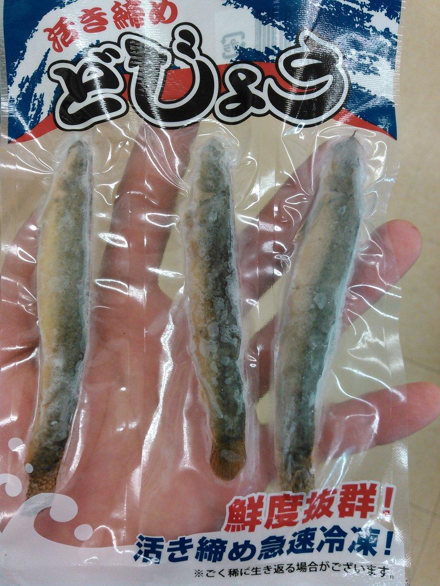 [魚]ンンンンンンンンン!?[2016年9月12日]
