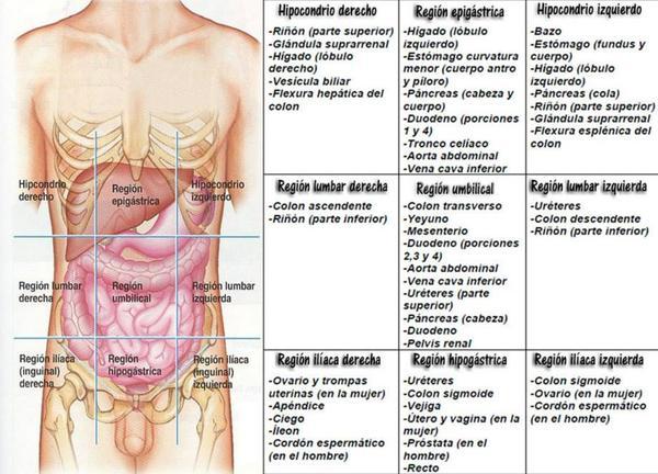 Print Exercise 1 The Language of Anatomy flashcards
