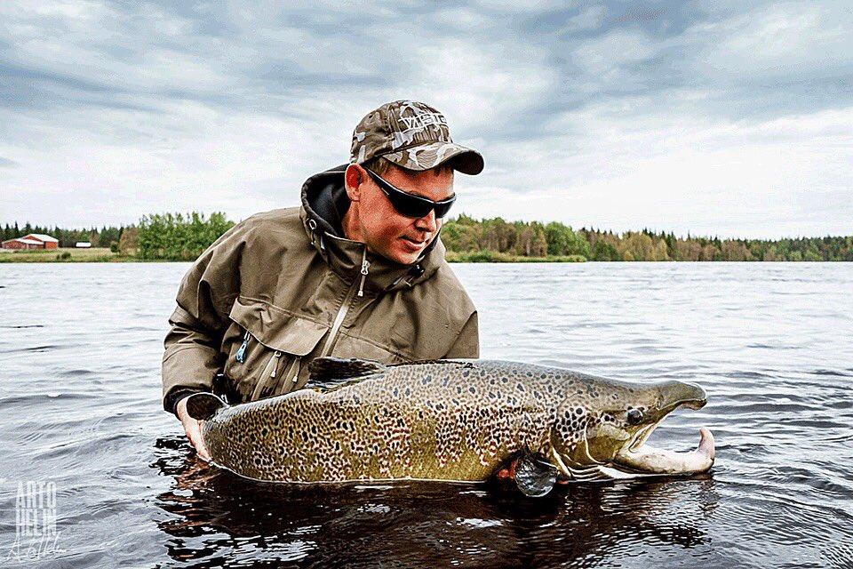 Monster caught at Kengis Bruk, Torne River, Northern Sweden. 120cm / 33lbs. 🇸🇪© Arto Helin  #looptackle https://t.co/W7Ol6BwY8R