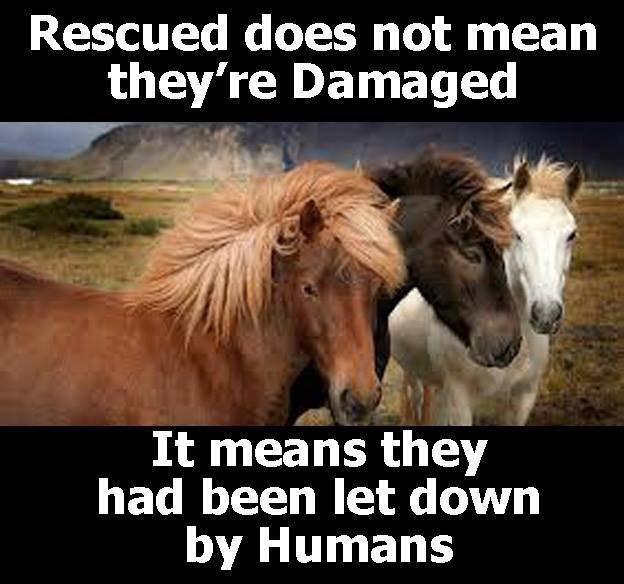 horses4homes essex