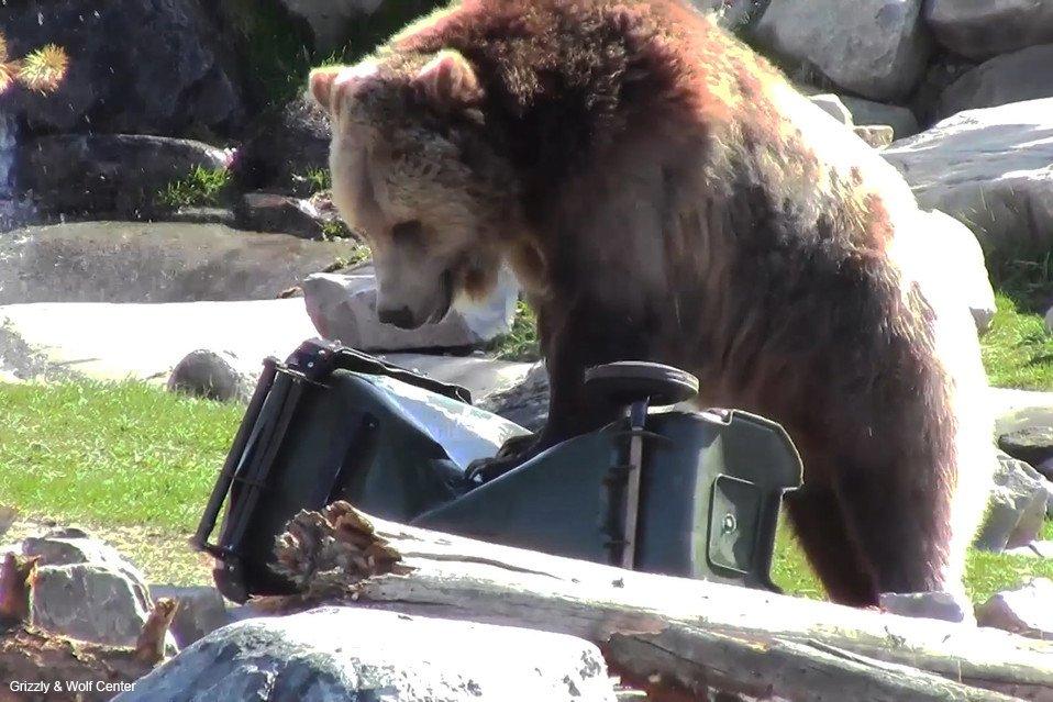 「耐クマ製品」の認証で活躍する8匹の検査官 https://t.co/PUR77b7Gsm クマのコバックは、ふた、ラッチ、側面から食物容器を壊すほど器用。製品がクマの攻撃に60分間耐えれば、耐クマ性の認定証を獲得することになる