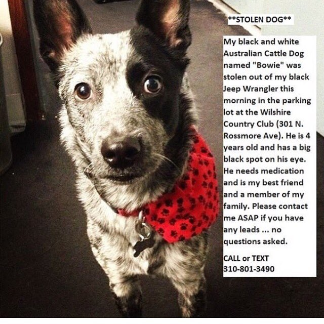 Please help!!!! Los Angeles!!! My friend is missing his dog! https://t.co/mYa7XZpe1b